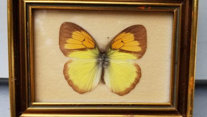 A Floralp Tyrol butterfly.