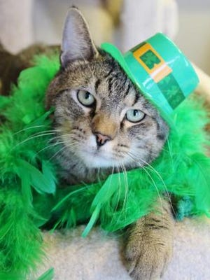 Smokey hopes to have a home to spend St. Patrick's Day in.