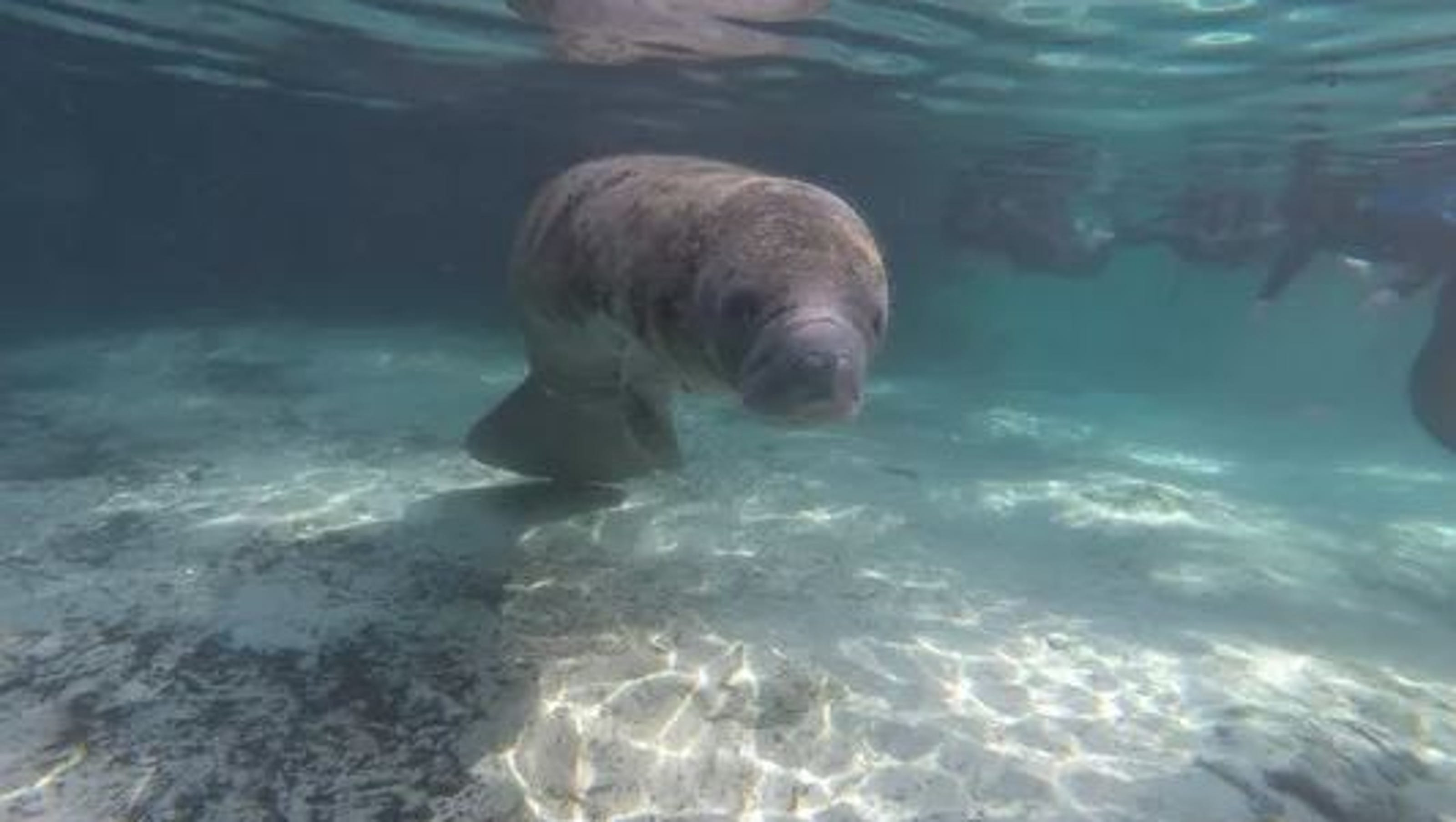 Boating Safety Manatee Technology And Shark Science Top The