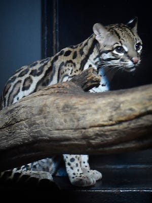 ZooAmerica North American Wildlife Park will offer free admission Jan. 27 and 28.