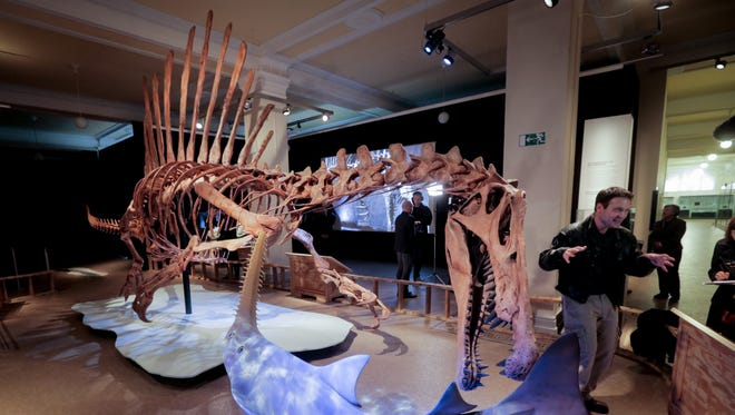 "Palaeontologist Nizar Ibrahim stands next to a life-sized skeleton model of a Spinosaurus at a Germany museum. Ibrahim will present ""National Geographic Live: Spinosaurus: Lost Giant of the Cretaceous"" Jan. 24, 2019, at Clowes Hall."