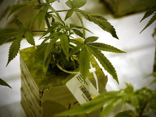 STC 0618 Marijuana 2
