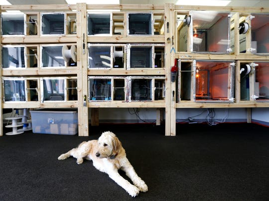 Dublin, a goldendoodle, lays on the floor of Slate Robotics in front of a bank of 3D printers on Tuesday, July 17, 2018.