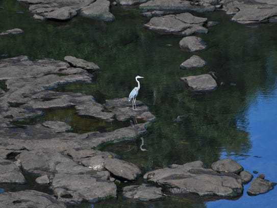 A blue heron stands on exposed rocks above low water