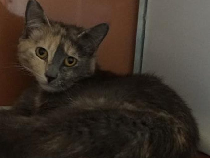 Annie is a stunning 2-year-old dilute tortie. She has