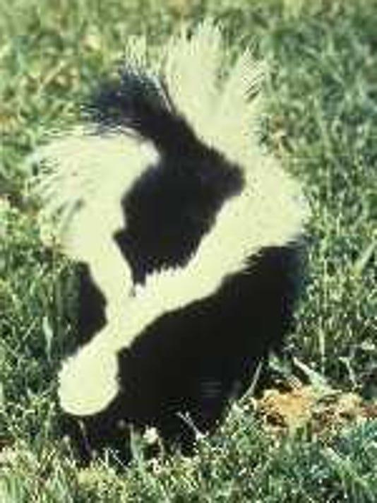 -skunk.jpg_20060820.jpg