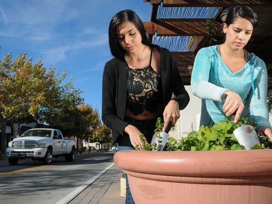 Urban Planting1
