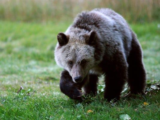 Sacred Bears