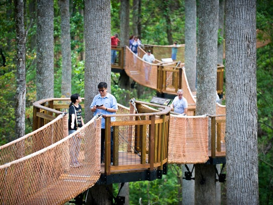 Guests can walk through the Treetop Canopy Walk, which