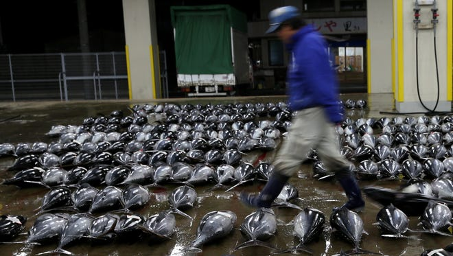 An employee arranges fresh tuna for auction at Kiikatuura fresh tuna market on February 7, 2014 in Nachikatsuura, Japan.