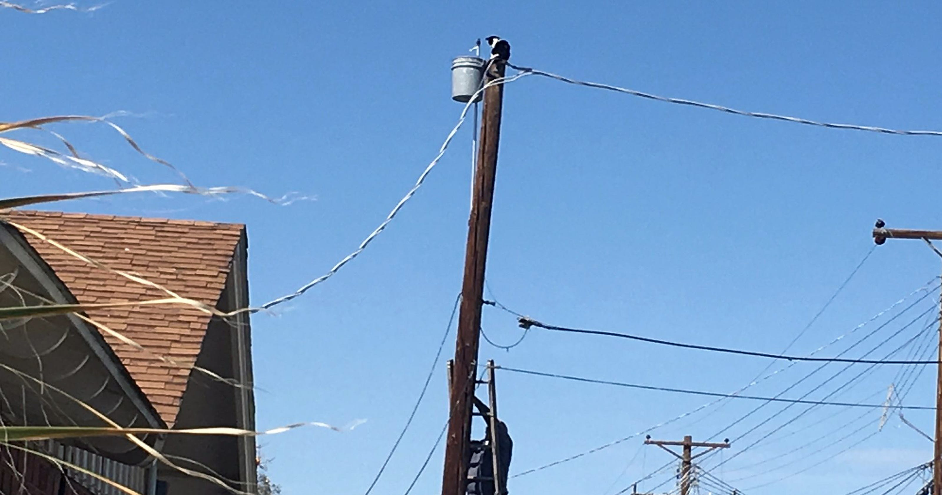 Emergency calls for cat stuck on utility pole clog Phoenix\'s 911 lines