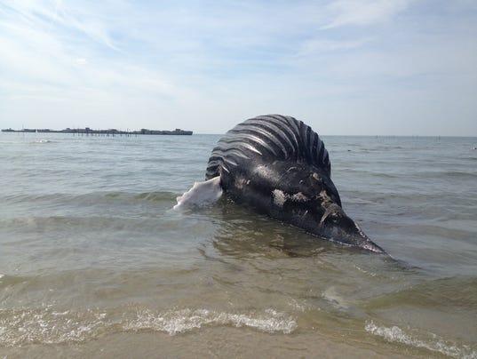 CBBT Whale