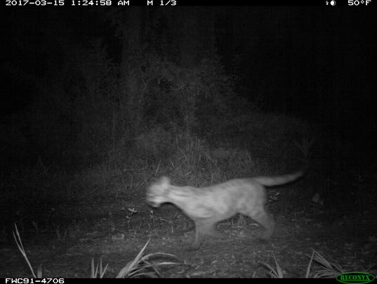 Panther07.jpg