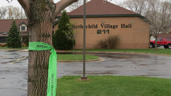 Green ribbons in the Village of Rothschild, 2016, showing how many community trees are at risk from emerald ash borer. Ribbons go up again Arbor Day 2017.