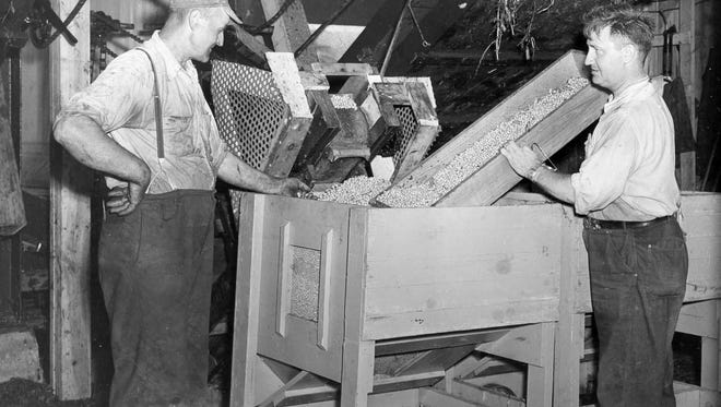 Pea vines were fed into machinery that would separate the peas from the vines and pods at Lakeside Foods in Manitowoc in the 1940s.