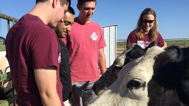 New Mexico State University electrical engineering students Zach Abbott, from left, German Montes and Christian De La Peña stand with Laura Boucheron, assistant professor in the NMSU Klipsch School of Electrical and Computer Engineering, as they get acquainted with cows at the Jornada Experimental Range. The students are designing a camera prototype to help researchers learn more about cattle.