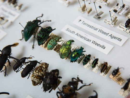 The O'Briens have one of the largest privately held insect collections in the world. They specialize in weevils and planthoppers.