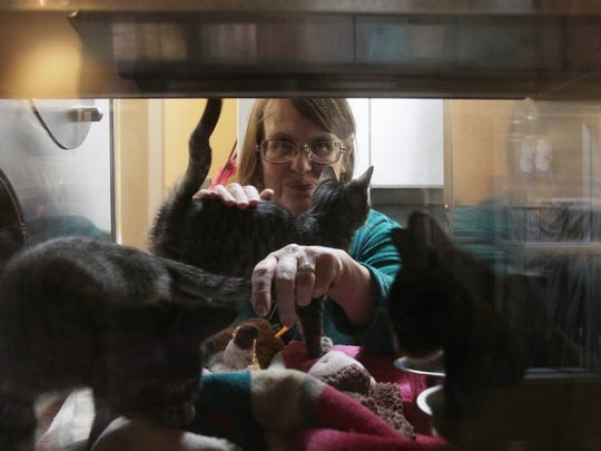 "Volunteer Shari Mosier plays with kittens at the Palm Springs Animal Shelter during its ""Home for the Holidays"" adoption drive on Saturday, Dec. 19."