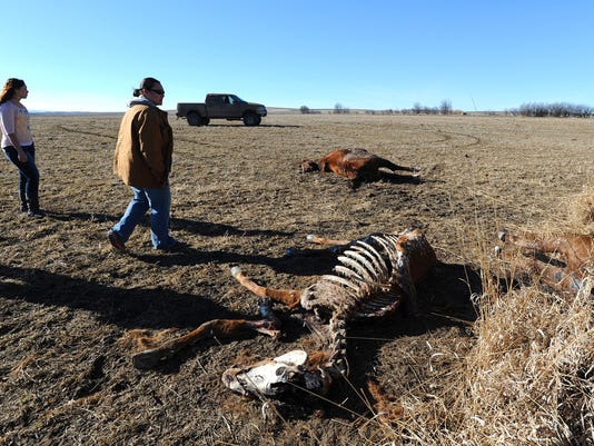 w02-16-horse-death