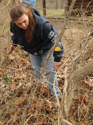 Casey Good, with Alvis House, starts to cut down an invasive plant Monday morning at the Junction Earthworks Archaeological Park and Nature Preserve.