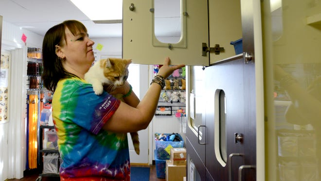 Jenn Bennett pulls Mister, a cat at the Fairfield Area Humane Society, out of a cage as she cleans the cat area.
