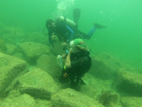 Mote Marine Laboratory scientist David Vaughan works with another scientist to plant coral at Fort Zachary Taylor State Park in Key West.