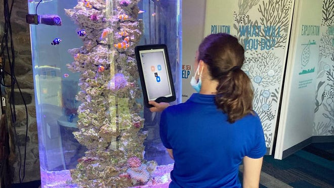Seacoast Science Center offers virtual field trips and free online resources to engage students in learning about marine sciences and the natural world around them. Here, naturalist Daryn Clevesy provides students a close up view of clown fish in a Restoring Reefs virtual field trip program.