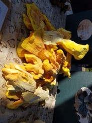 Chicken of the wood mushrooms from Asheville Fungi.