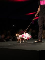 A dog model in the Orostani Couture canine fashion