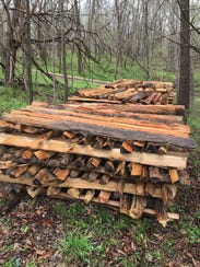 Some of the diseased oak trees are cut down and then