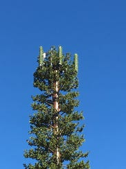 This Verizon cell tower disguised as a tree is at Kings