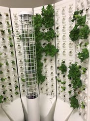 Lettuce grows in a new hydroponics system at St. John