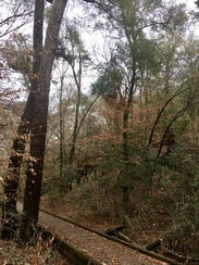 Bogue Chitto State Park in Franklinton