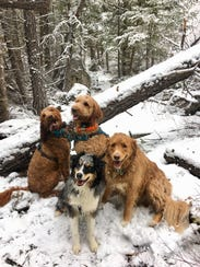 Adventure dogs Tonks, Albus, Remy and Toby pose for