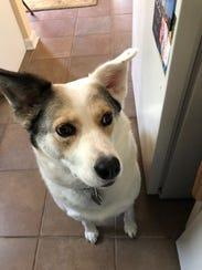 LeeLee, rescued from the Nashville Humane Association,