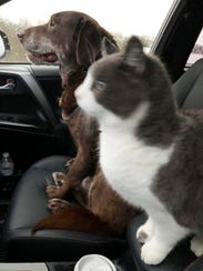 Just two very best friends cruising.
