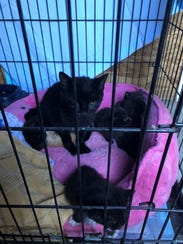 A mother cat and litter at Pets Without Parents, Sevier