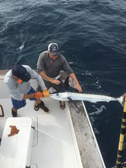 The first white marlin of 2018 was caught on the Stalker