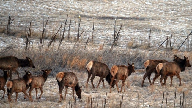 Lincoln County provides ample habitat for elk herds and hunters.