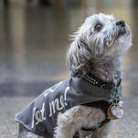 Reno-Tahoe International Airport uses therapy dogs in its Paws 4 Passengers program.