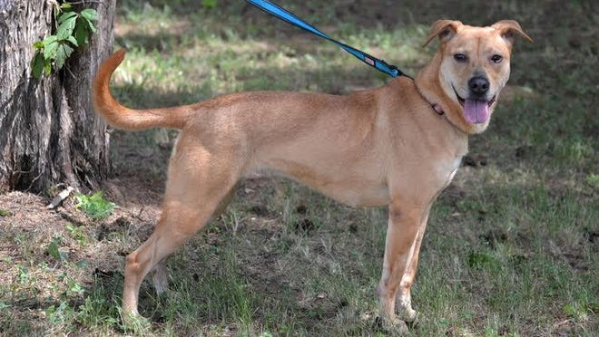 Joanie is available for adoption at the Jackson-Madison County Humane Society. Reach them at (731) 422-5366.