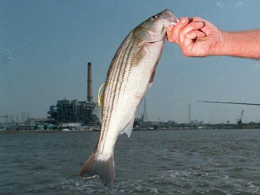 636162001769255918-fishing1202.JPG
