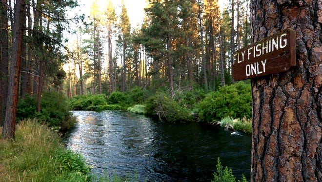"""A """"Fly Fishing Only"""" sign is posted to a pine tree along on the Metolius River."""