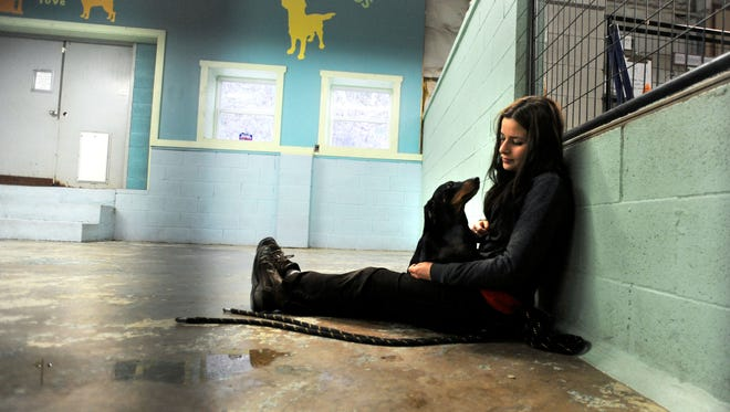 Alaina Doll of Brother Wolf Animal Rescue sits with a Dachshund at the shelter on Tuesday. Brother Wolf has helped the Buncombe County Animal Shelter cut the number of dogs and cats euthanized by taking hard-to-place animals from the county shelter and rehabilitating them before adoption.