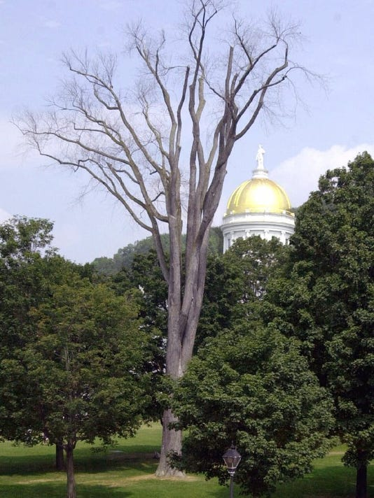 20150428 Elm at Statehouse