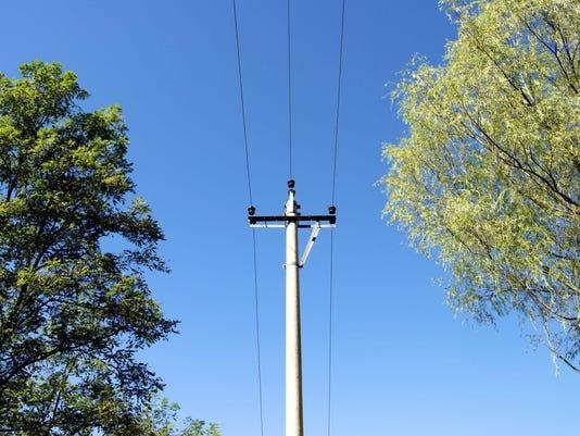 Tree-power-line