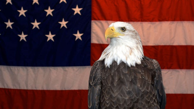 Uncle Sam, a bald eagle, appears at the Raptor Rendezvous at Brevard Zoo in this file photo. The Raptor Project presents the birds of prey.