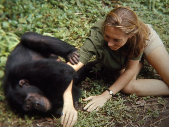 Jane Goodall is shown in her element in the documentary