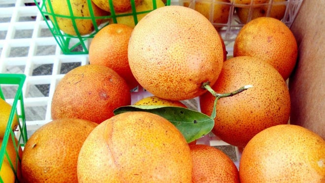 Check listings for farmers markets in Southwest Florida for a variety of fruit and vegetables as well as other goods.