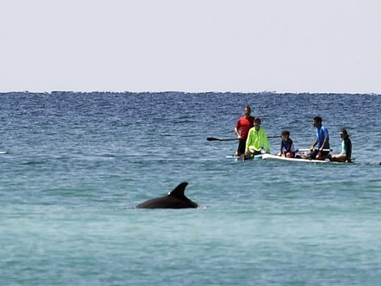 In this April 5, 2018, file photo, paddleboarders watch a dolphin swim by near Grayton Beach State Park in Florida